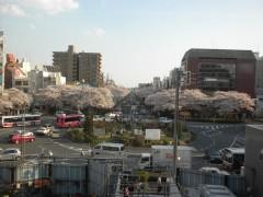 桜並木のシンメトリー