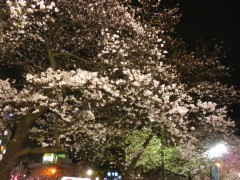 駅前夜桜見物