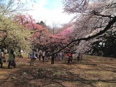 新宿御苑1(2014年3月29日撮影)