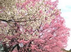 新宿御苑4(2014年3月29日撮影)