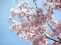 新宿御苑5(2014年3月29日撮影)
