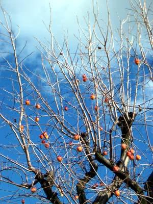 青空をバックに熟柿